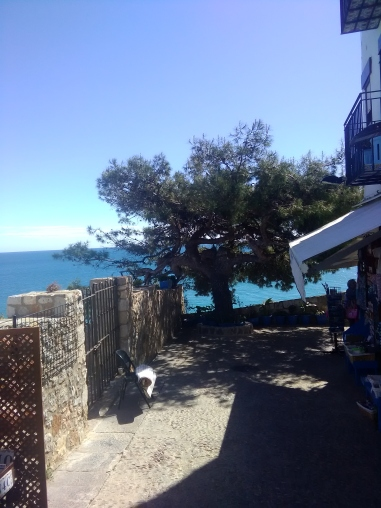 view from cafe on ramparts